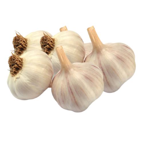 orto9d-aglio-secco-rosso-kg1.png